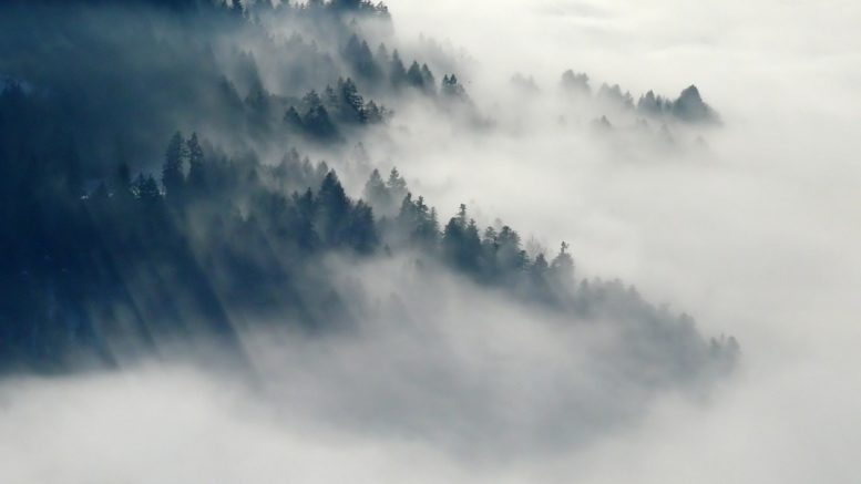 survival quiz forest