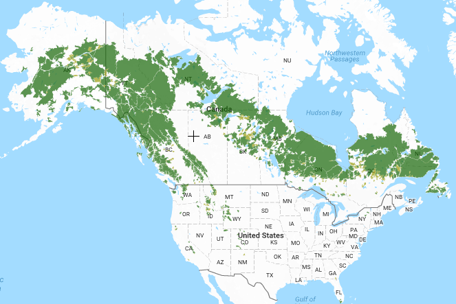 Intact forests of North America