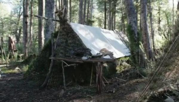 long term survival shelter callie